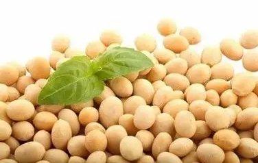 你必须要了解的豆粕期权基础知识