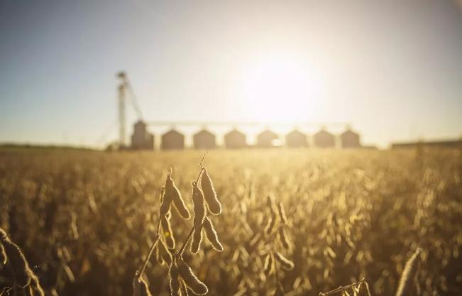 贸易摩擦 、大豆与通胀传递