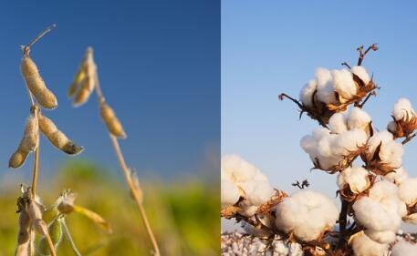 周俊:贸易战对豆粕、棉花价格的影响