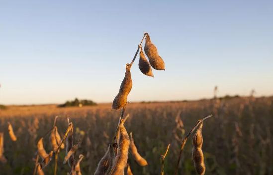 焦健:楼贵粮贱何其久 全球农产品极具配置价值