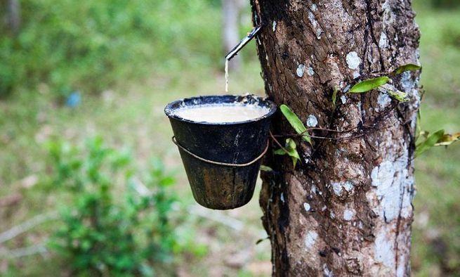 开始了,泰国率先进行橡胶供给侧改革