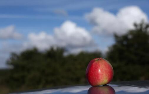 8月24日某期货公司苹果调研内部会议发言(李海)