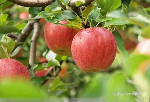 符冰:苹果大戏已经上演,无论胜败都是豪杰