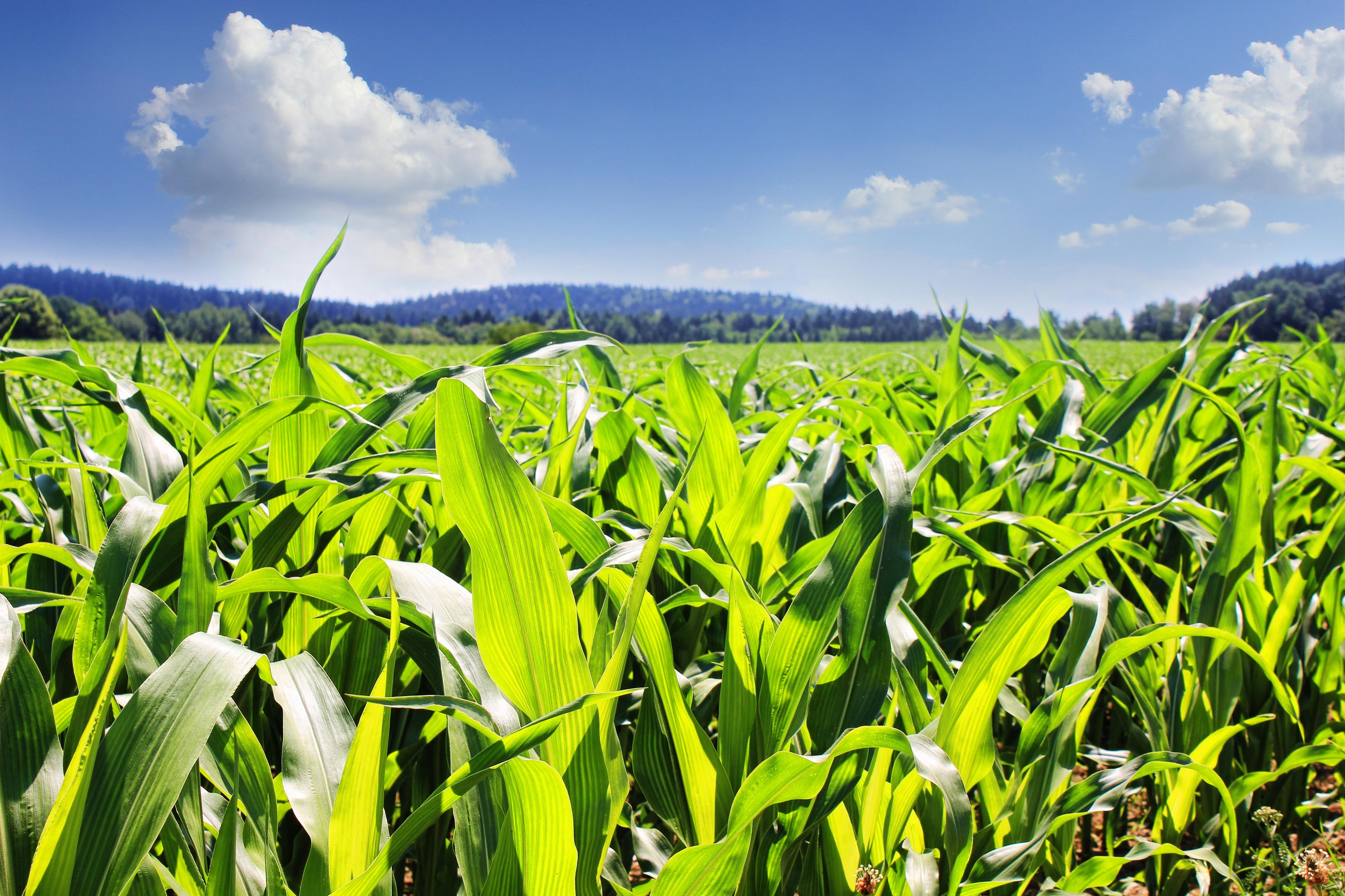 2018/19新季玉米市场行情分析研讨会