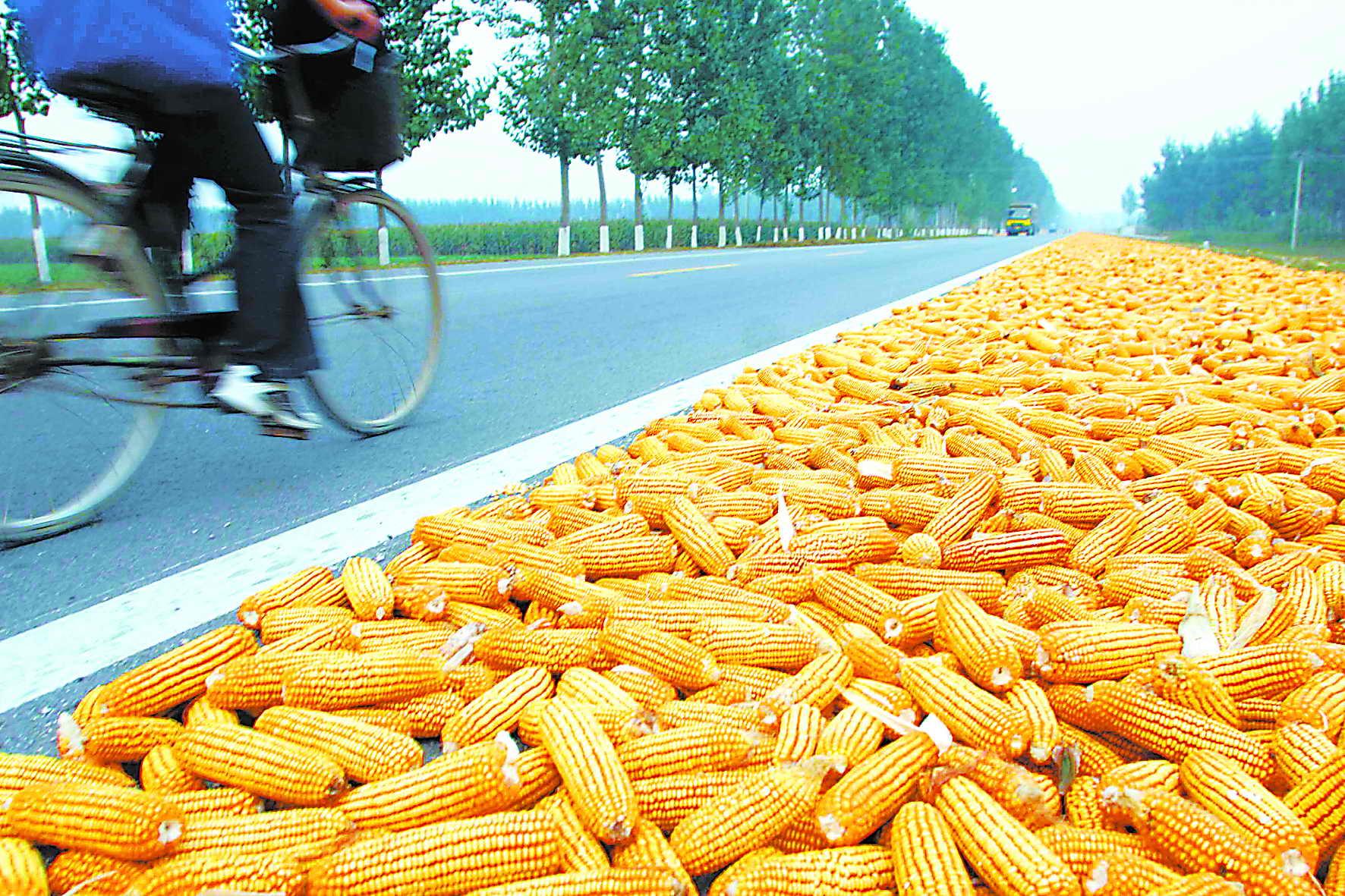 玉米或停拍,粮价还能窜一窜?
