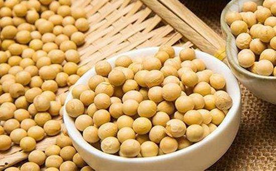 喜鹊资产周俊:期权是现阶段交易豆粕的最佳工具