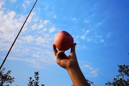 善始善终 苹果何去何从?激战正酣!