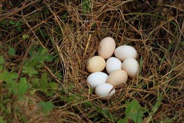 """备货季到来,掌握季节规律才能把握鸡蛋""""命门"""""""