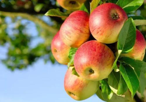 从武松打虎看苹果期货的交易逻辑