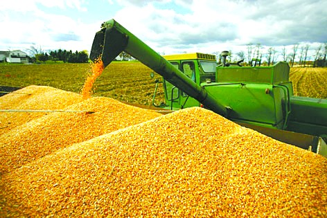 农产品2019年策略报告——核心因素继续发酵