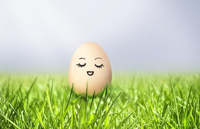 2019年鸡蛋市场行情研讨沙龙