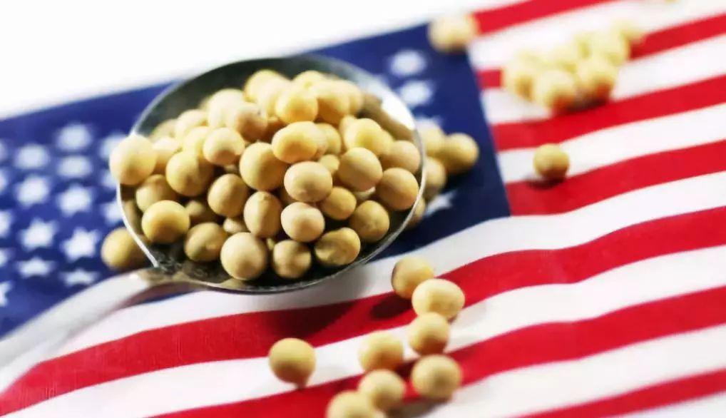 美国大豆协会:我们正在失去中国市场 农民处于绝望的境地