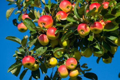 """苹果期货""""叫屈"""":期货不是推动现货涨价的主因"""