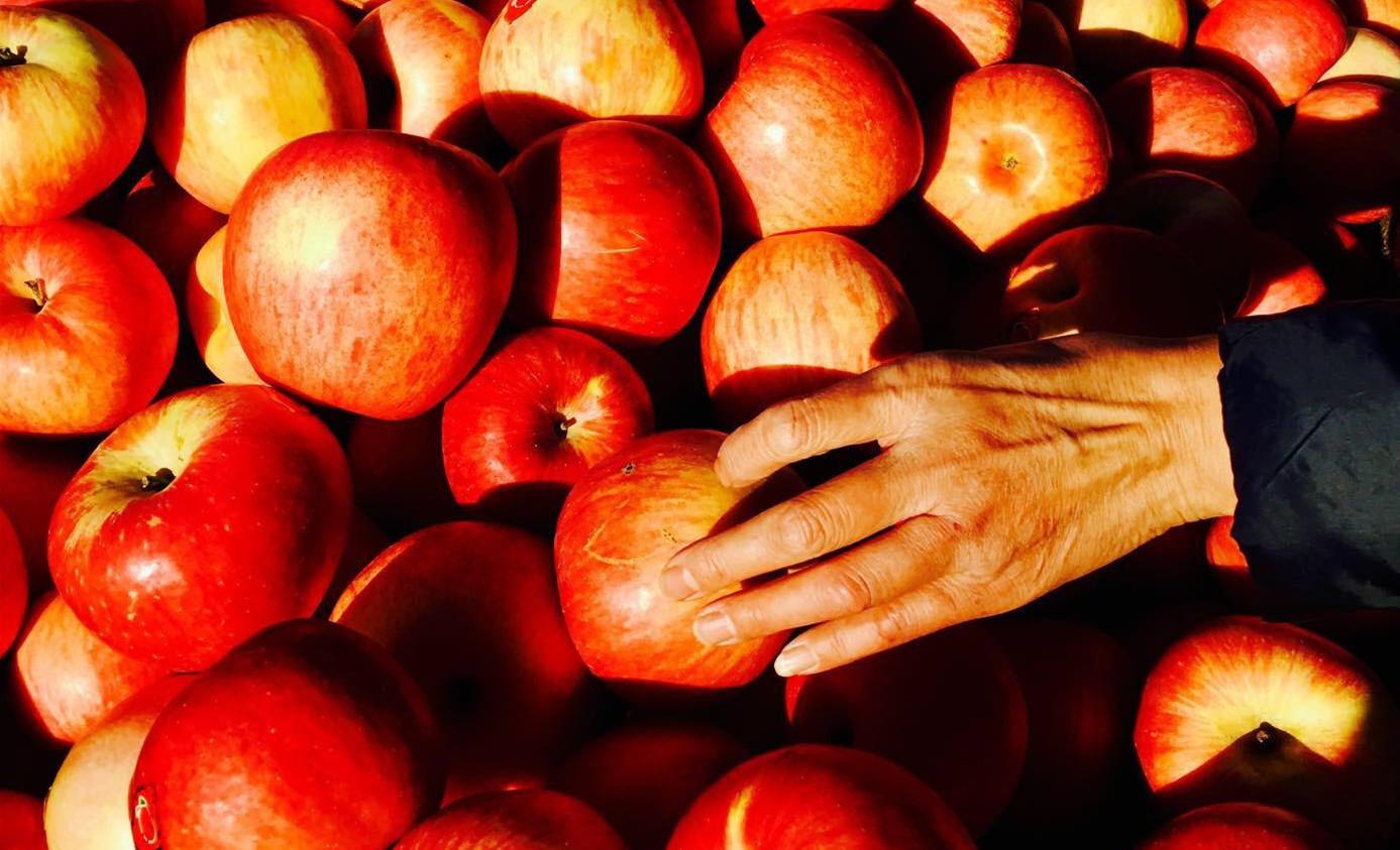 苹果为什么这么贵?