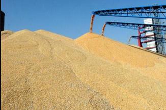 猪瘟波及华中地区 猪料需求下滑 豆粕、玉米去库存压力大