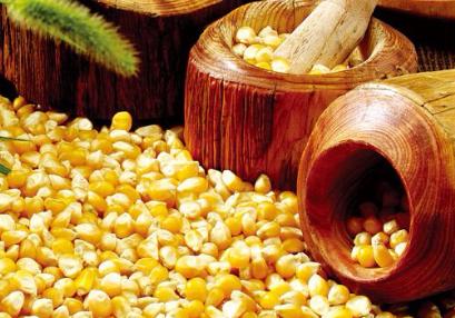 玉米的春天到底来了没有?