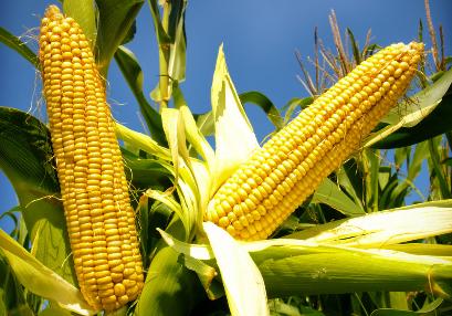 玉米期货的季节性套利分析