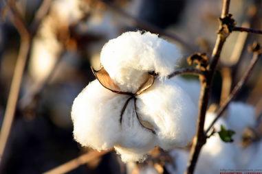 去库存背景下,全球棉花、棉纱市场供需格局现状与趋势