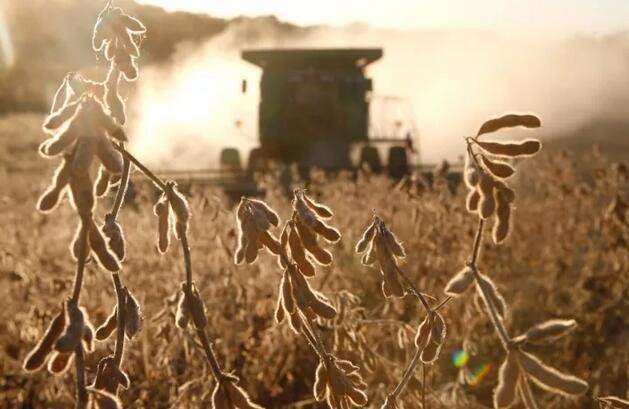 2018豆粕期权——带给我们财富的种子