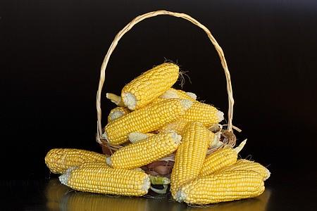 为什么黑龙江、吉林玉米价格涨不起来?竟然是这个原因!